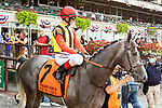 JULY 10, 2021: Tokyo Gold post parade in the Gr.1 Belmont Derby Invitational Stakes, going 1 1/4 mile on the turf, at Belmont Park in Elmont, New York. Sue Kawczynski/Eclipse Sportswire/CSM