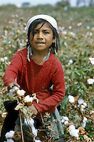 Girl picking cotton in valley of Chira River in northern Peru