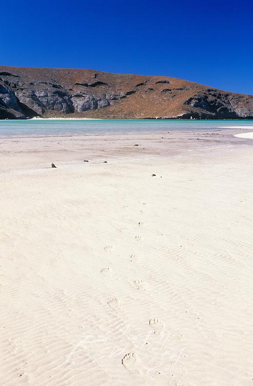 Mexico, Baja California Sur, La Paz, Playa Balandra,.Footprints on Beach