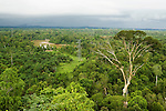 Disturbed secondary lowland rainforest with power lines, Kinabatangan River, Sabah, Borneo, Malaysia