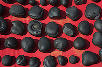 Ammonite Fossils at a Market in Kathmandu the local use these as religious objects on their shrine at home or in Temples