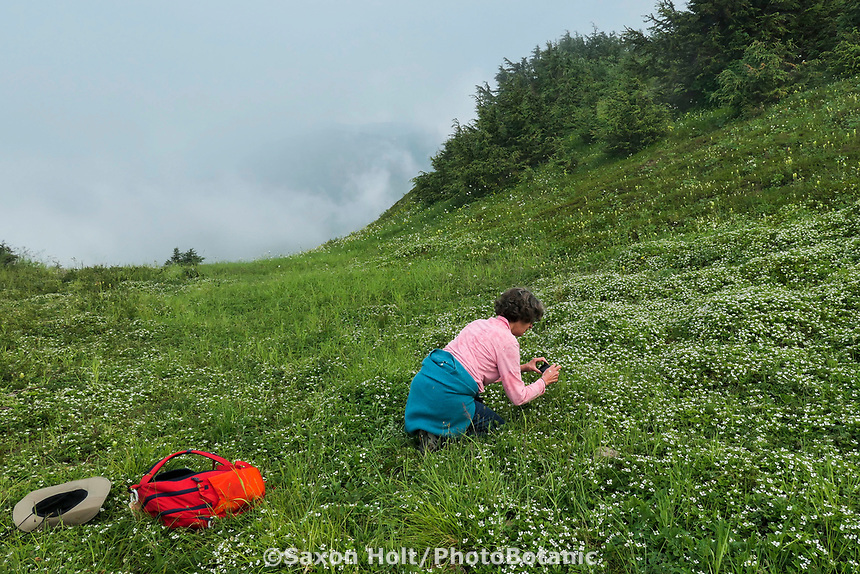 Photographing wildflowers on Glen Alps Trail in Chugach Mountains, Alaska