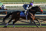 ARCADIA, CA  OCTOBER 25: Breeders' Cup Turf Sprint entrant Legends of War, trained by Doug F. O'Neill, exercises in preparation for the Breeders' Cup World Championships at Santa Anita Park in Arcadia, California on October 25, 2019.  (Photo by Casey Phillips/Eclipse Sportswire/CSM)