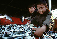 Children employed to sell fish in Istanbul, Turkey - Child labor as seen around the world between 1979 and 1980 - Photographer Jean Pierre Laffont, touched by the suffering of child workers, chronicled their plight in 12 countries over the course of one year.  Laffont was awarded The World Press Award and Madeline Ross Award among many others for his work.