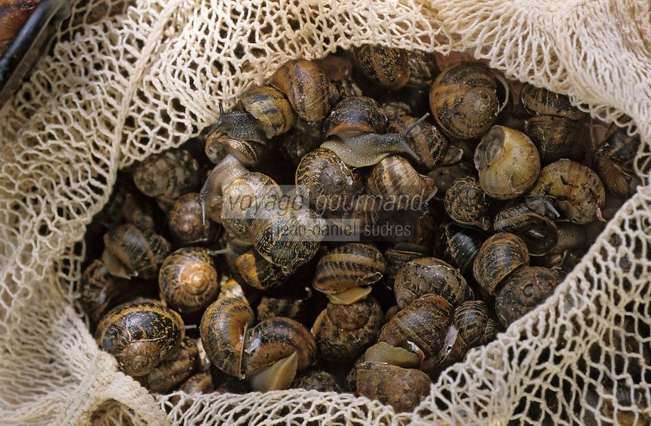 Europe/France/Languedoc-Roussillon/66/Pyrénées-Orientales/Banyuls-sur-Mer: recettes de la Sanch, escargots pour la Cargolade - escargots grillés aux Sarments