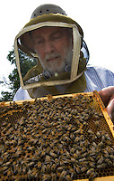 Beekeeper Barry Conrad inspects one of the honeybee hives on his farm. U.S. Agriculture officials are preparing a major effort to find the reason behind die-offs in beehives that threaten farming industries that use bees for pollination. Conrad is concerned that colony collapse disorder may do more damage to central Ohio beekeeper's hives.