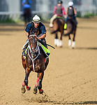 LOUISVILLE, KY - MAY 02: Majesto, trained by Gustavo Delgado and owned by Grupo 7C Racing Stable, exercises and prepares during morning workouts for the Kentucky Derby and Kentucky Oaks at Churchill Downs on May 2, 2016 in Louisville, Kentucky. (photo by John Voorhees/Eclipse Sportswire/Getty Images)