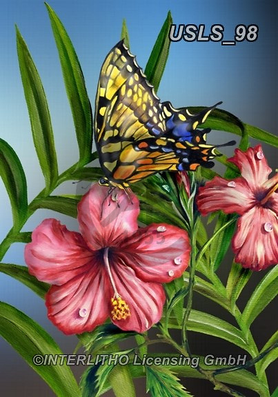Lori, REALISTIC ANIMALS, REALISTISCHE TIERE, ANIMALES REALISTICOS, zeich, paintings+++++2-MonarchonHibiscus,USLS98,#a#, EVERYDAY ,puzzle,puzzles