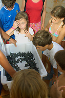 Curious children observe a clutch of olive ridley turtle hatchlings, Lepidochelys olivacea, ready to be released into the ocean , Costa do Sauipe, Bahia, Brazil South Atlantic
