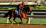 October 30, 2019: Breeders' Cup Dirt Mile entrant Giant Expectations, trained by Peter A. Eurton, exercises in preparation for the Breeders' Cup World Championships at Santa Anita Park in Arcadia, California on October 30, 2019. Scott Serio/Eclipse Sportswire/Breeders' Cup/CSM