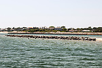Gray Seals hauled out on the Chatham Bars, Cape Cod.  Approximately 600 selas are hauled out on the Chatham Bars inside of the harbor.  They have been driven there by several large Great White Sharks hunting them just outside of the harbor on Cape Cod, Massachusetts.  100 hundred added seals can been seen swimming in a warm pool just behind the hauled-out seal colony.