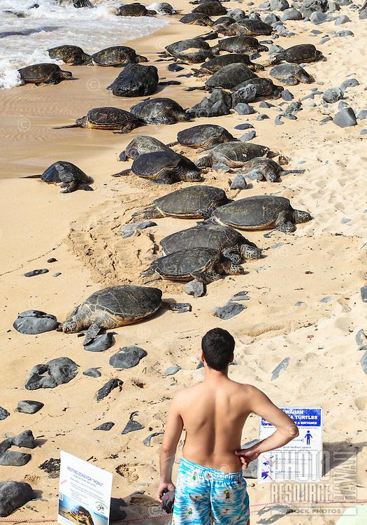 A man observes endangered Hawaiian green sea turtles (or honu) resting at Ho'okipa Beach, Maui.