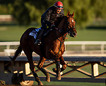 OCT 29: Breeders' Cup Dirt Mile entrant Giant Expectations, trained by Peter A. Eurton, gallops at Santa Anita Park in Arcadia, California on Oct 29, 2019. Evers/Eclipse Sportswire/Breeders' Cup