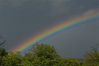 Rainbow over tree tops<br />