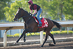 SHA TIN,HONG KONG-DECEMBER 08 : War Decree,trained by Aidan O'Brien,exercises in preparation for the Hong Kong Cup at Sha Tin Racecourse on December 8,2017 in Sha Tin,New Territories,Hong Kong (Photo by Kaz Ishida/Eclipse Sportswire/Getty Images)