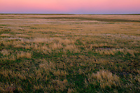 Short grass prairie<br />