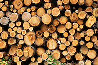 Detail of a pile of timber. Pine tree. Smaland region. Sweden, Europe.