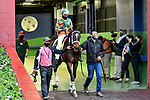 February 28, 2021: Istan Council #4 , ridden by Joseph Talamo in the Bayakoa Stakes (Grade 3) for trainer J. Larry Jones at Oaklawn Park in Hot Springs,  Arkansas. Ted McClenning/Eclipse Sportswire/CSM