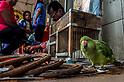 Fortune teller with Loriculus bird