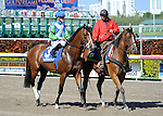 Nicanor in the post parade before the Appleton Stakes during Florida Derby Day on April 3, 2011 at Gulfstream Park in Hallandale Beach, Florida.  (Bob Mayberger/Eclipse Sportswire)