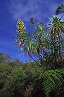 Native plants, Kauai greensword, Waimea canyon