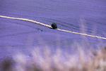 5-Ways Flax Fields