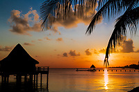 Colorful sunset on an overwater bungalow, a pier, and palm tree leaf silhouettes in Rangiroa Tuamotus atoll, French Polynesia, South Pacific Ocean