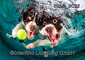 REALISTIC ANIMALS, REALISTISCHE TIERE, ANIMALES REALISTICOS, dogs, paintings+++++SethC_Flynn_Jenner_320B7453workPRINT,USLGSC32,#A#, EVERYDAY ,underwater dogs,photos,fotos ,Seth