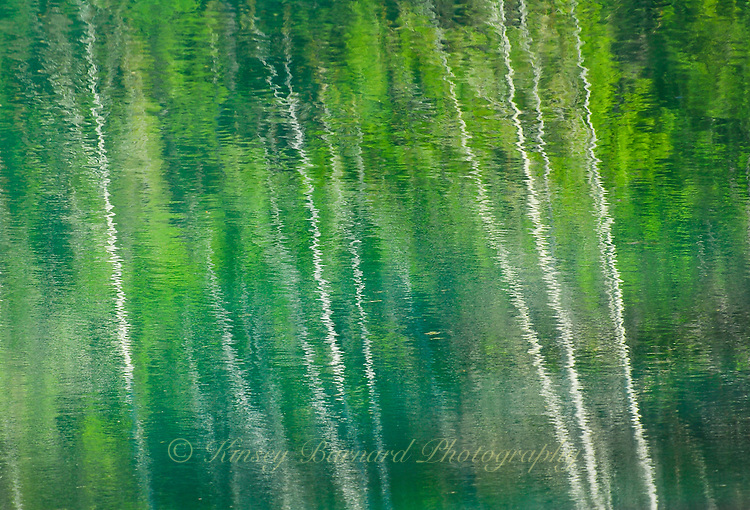 """""""ASPEN SPRING"""" ORIGINAL 24 X 36 GALLERY WRAPPED CANVAS SIGNED BY THE ARTIST $2,500. CONTACT FOR AVAILABILITY."""