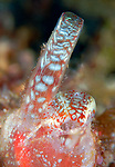 Persimmon SPonge underwater submit to Smithsonian 2013