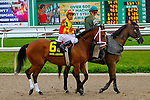 February 21, 2015:Angela Rose with Rafael Bejarano up in the Rachel Alexandra Stakes at the New Orleans Fairgrounds Risen Star Stakes Day. Steve Dalmado/ESW/CSM