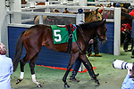 February 27, 2021 #5, Santa Cruiser in the paddock for the Southwest Stakes (Grade III) at Oaklawn Racing Casino Resort in Hot Springs, Arkansas. Ted McClenning/Eclipse Sportswire/CSM