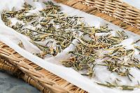 Weiden-Rinde, Weide, Weidenrinde, Rinde wird getrocknet und zu Heilzwecken genutzt, Borke, Willow, bark, rind