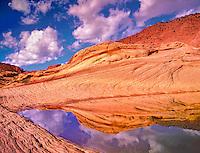 Rain water pond. Vermillion Cliffs Wilderness, Utah/Arizona
