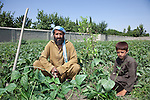 3 June 2013_NHLP_Jalalabad Horticulture and Livestock