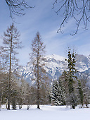 Bad Ragaz, Switzerland. Trees and mountains covered in snow.