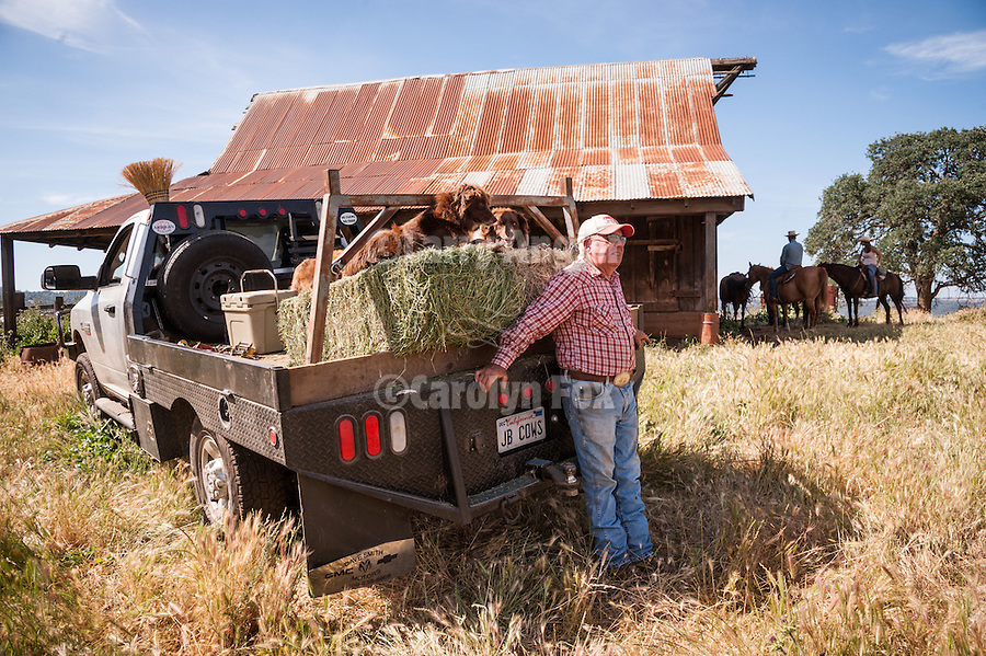 Gathering cattle on the historic Chin Ranch, Amador County, Calif., and overlooking the Mokelumne River Canyon and Calaveras County.<br /> <br /> John Brownlie and his dogs at the Chin Ranch barn