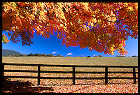 Fall colors in Nelson County, Virginia. Photo/Andrew Shurtleff