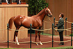 12 September 2011.Hip #122 Distorted Humor - Tabarin sold for $300,000.