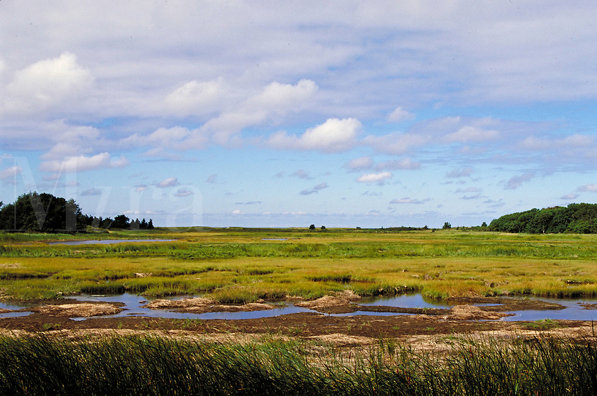 Marshland under a bright sun and broken clouds; small watercourse; distant trees. Orleans Massachusetts, Cape Cod.