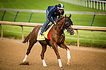 LOUISVILLE, KY - MAY 04: Fellowship gallops in preparation for the Kentucky Derby at Churchill Downs on May 04, 2016 in Louisville, Kentucky.(Photo by Alex Evers/Eclipse Sportswire/Getty Images)