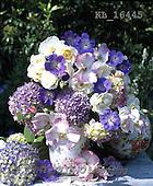 Interlitho, FLOWERS, BLUMEN, FLORES, photos+++++,KL16445,#f#