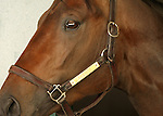10 April 2010.   Aikenite is alert in his stall on the morning of the Bluegrass Stakes.