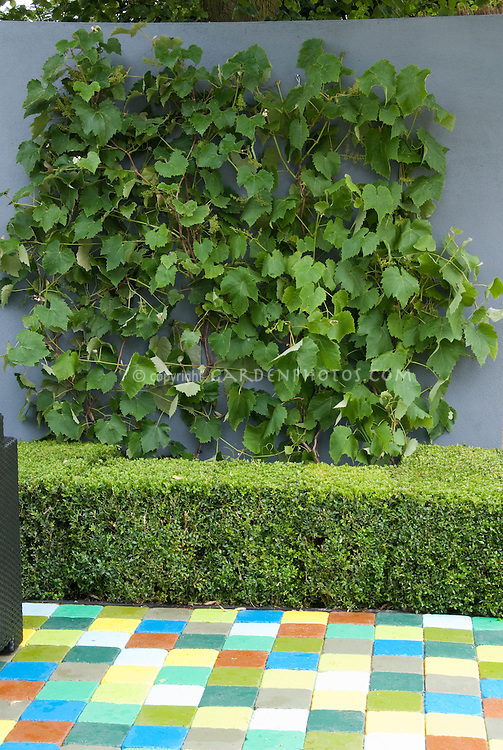 Grape vines in fruitscaping backyard, integrated into yard landscape, with colorful patio