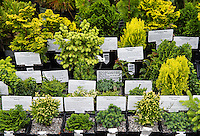 Bonsai plant selection at a garden center.