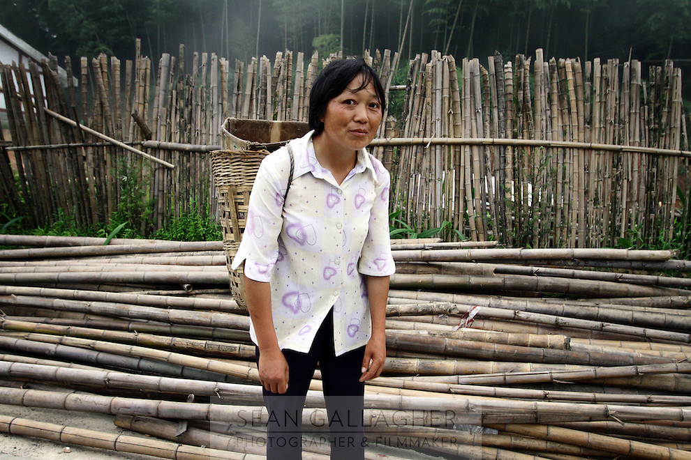 As bamboo does not fall within the protection of the 1998 logging ban, it is frequently felled with little monitoring or regulation.