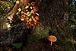 Mushroom at base of tree in Alaska