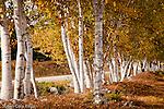 Fall foliage in Bridgton, Oxford County, ME