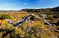 Gouland Downs on Heaphy Track - Kahurangi National Park, Nelson Region, New Zealand