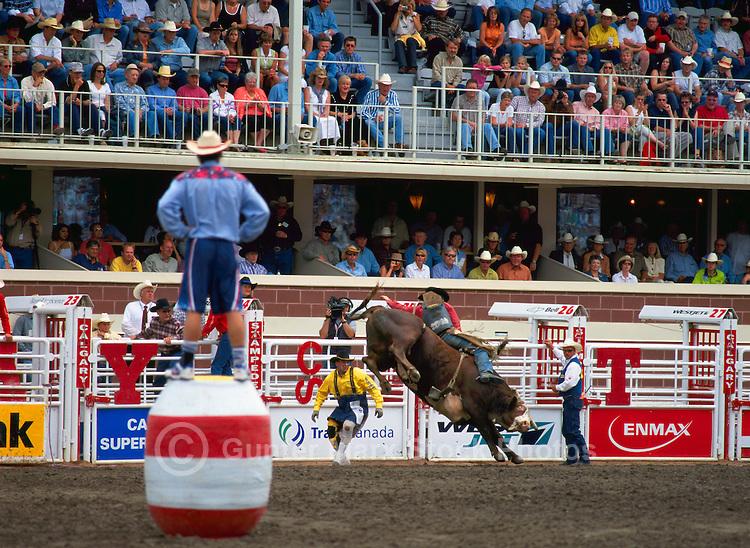 Rodeo Clown watching Cowboy riding Bucking Bull at Calgary Stampede, Calgary, Alberta, Canada - Editorial Use Only